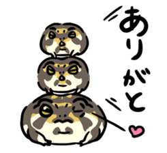 Frogs of the world sticker #748442