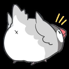 Java sparrow Stickers