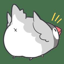 Java sparrow Stickers sticker #754903