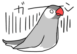 Java sparrow Stickers sticker #754926