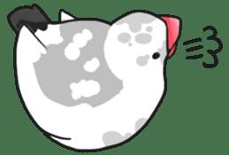 Java sparrow Stickers sticker #754933