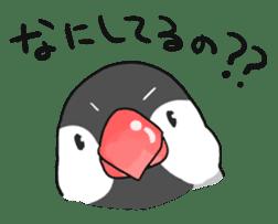 Java sparrow Stickers sticker #754936