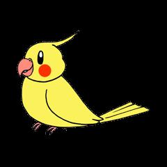 """""""Daily cockatiel"""" With bird 01"""
