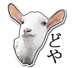 Shiropen the pygmy goat vol.1 sticker #769366