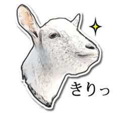 Shiropen the pygmy goat vol.1 sticker #769367
