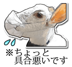 Shiropen the pygmy goat vol.1 sticker #769373