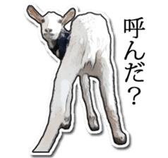 Shiropen the pygmy goat vol.1 sticker #769378
