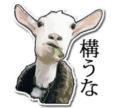 Shiropen the pygmy goat vol.1 sticker #769385