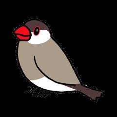 """""""Daily Java sparrow"""" With bird 02"""
