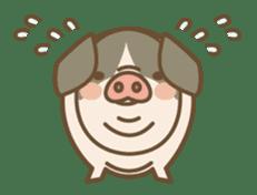 Pig farm sticker #780363