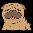 犬です。ぶるたんです。