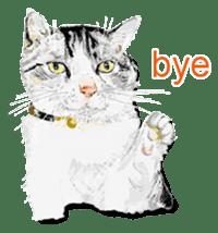 Just cats! sticker #835815