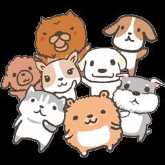Boson X DOGS