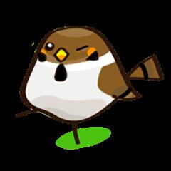 Funny bird Suzume-chan