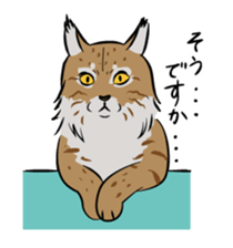 The cat of a fearful face sticker #886469