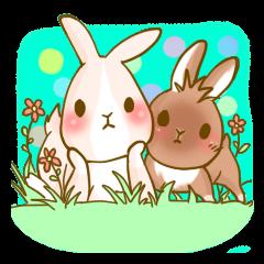 Rabbits Ami and foo