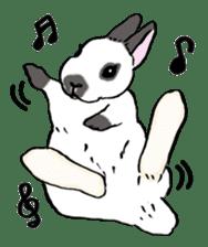 Rabbit Behavior(English ver.) sticker #905321