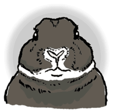 Rabbit Behavior(English ver.) sticker #905322