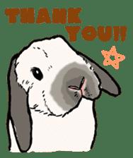 Rabbit Behavior(English ver.) sticker #905323