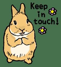 Rabbit Behavior(English ver.) sticker #905325