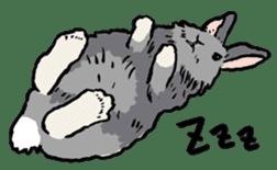 Rabbit Behavior(English ver.) sticker #905327