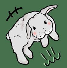 Rabbit Behavior(English ver.) sticker #905329