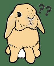 Rabbit Behavior(English ver.) sticker #905336