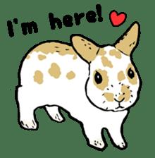 Rabbit Behavior(English ver.) sticker #905338