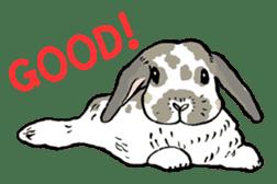 Rabbit Behavior(English ver.) sticker #905345