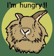 Rabbit Behavior(English ver.) sticker #905349