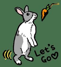 Rabbit Behavior(English ver.) sticker #905352