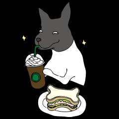 Japanese Terrier U-taro