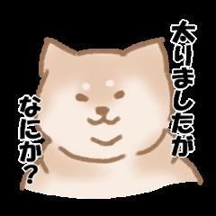 Shiba Inu !