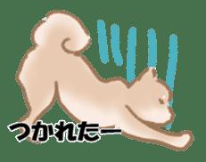 Shiba Inu ! sticker #910486