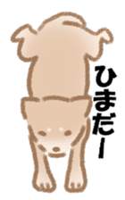Shiba Inu ! sticker #910488