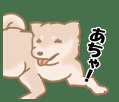 Shiba Inu ! sticker #910489