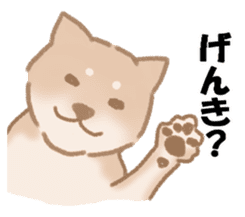 Shiba Inu ! sticker #910492