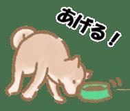Shiba Inu ! sticker #910495