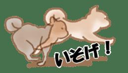 Shiba Inu ! sticker #910502