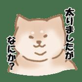 Shiba Inu ! sticker #910515