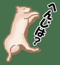 Shiba Inu ! sticker #910516