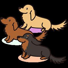 Jupi & Duchshund Buddies
