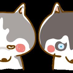 Scary Face Siberian Husky