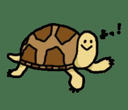 tortoises sticker #926399