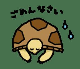 tortoises sticker #926407