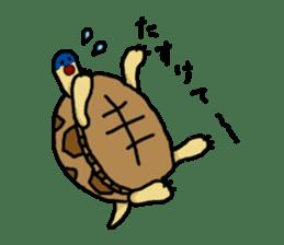 tortoises sticker #926411