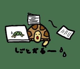 tortoises sticker #926414