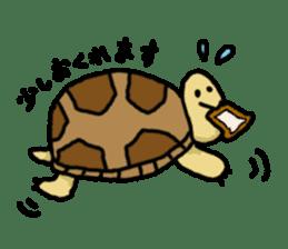 tortoises sticker #926427