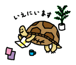 tortoises sticker #926428