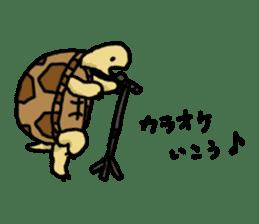 tortoises sticker #926432
